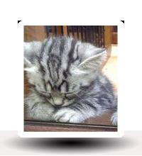Gatos tristes